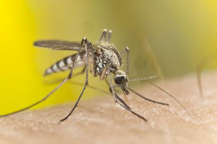 Was hilft gegen Mückenstiche - netpapa.de