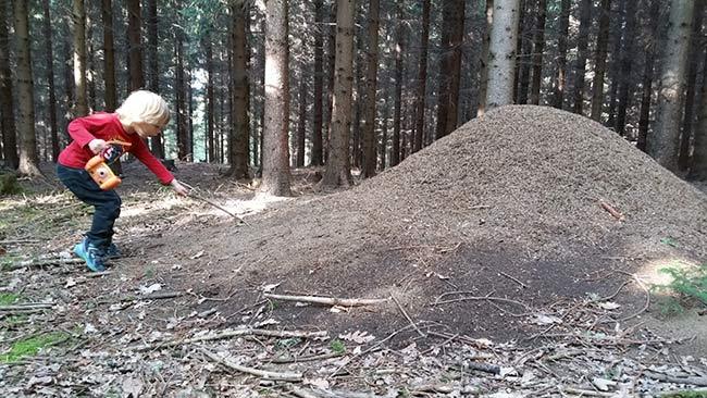 Endecke wie Millionen Ameisen im Wald wohnen