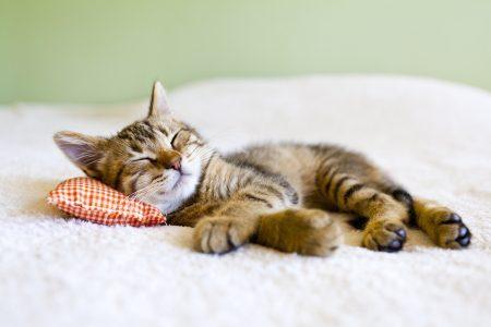 Katze im Kinderbett