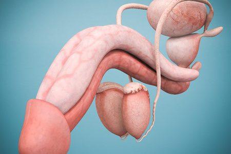 Vasektomie Durchführung