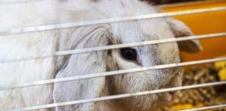 Kaninchen und Kinder