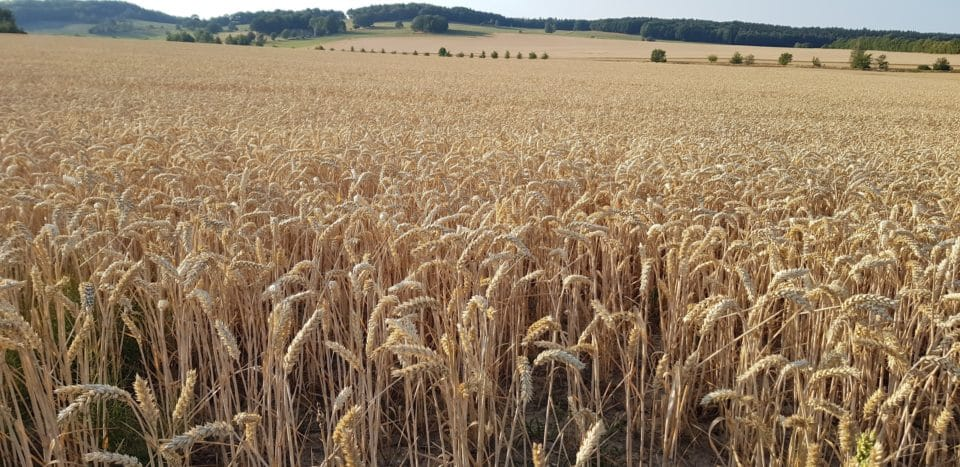 FOURMORE - Allianz