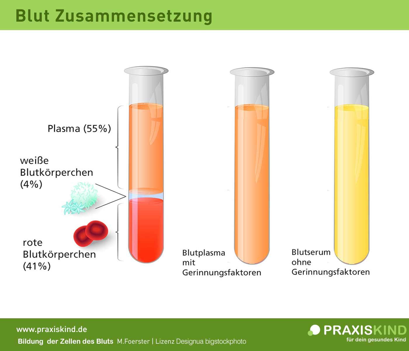 Blut Zusammensetzung Bestandteile