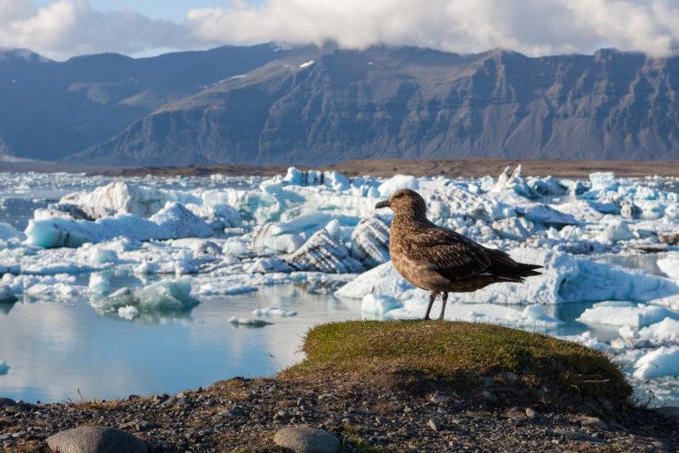 Konzept der globalen Erwärmung und des Klimawandels mit schmelzendem Eis. Basis des Vatnajokull-Gletschers bei Jokulsarlon, Island. Copyright: gagarych, bigstockphoto.com