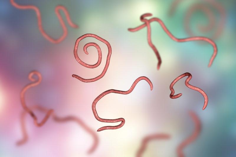 Madenwürmer beim Kind